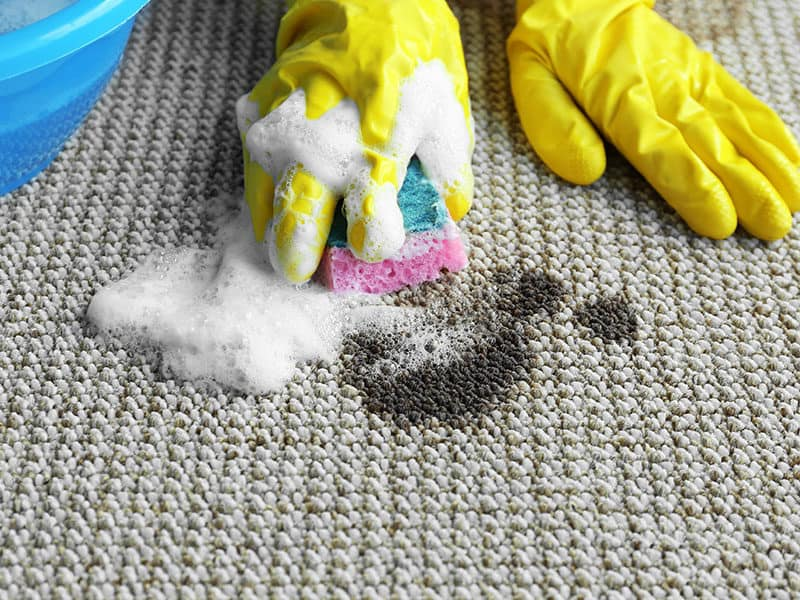 Carpet Stain Removers