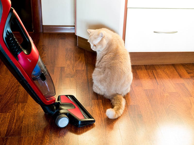 Vacuum Cleaners For Pet