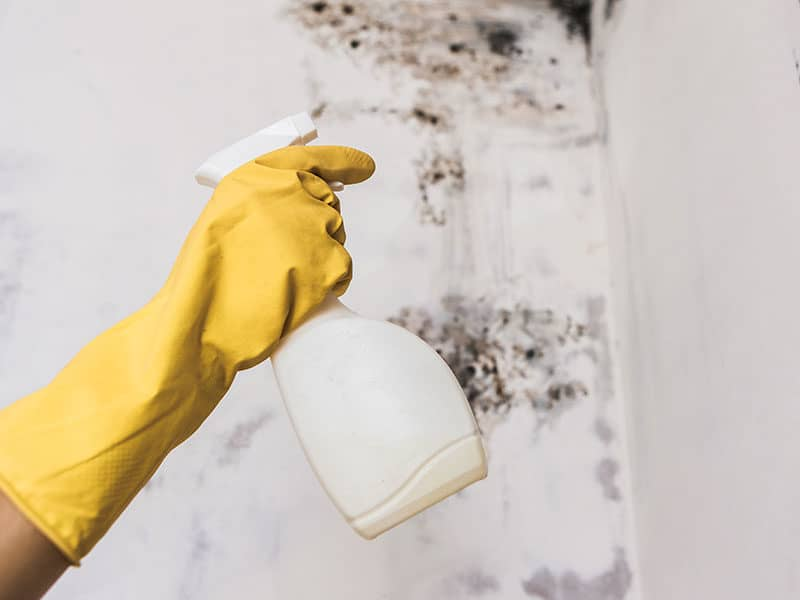 Mold and Mildew Cleaners