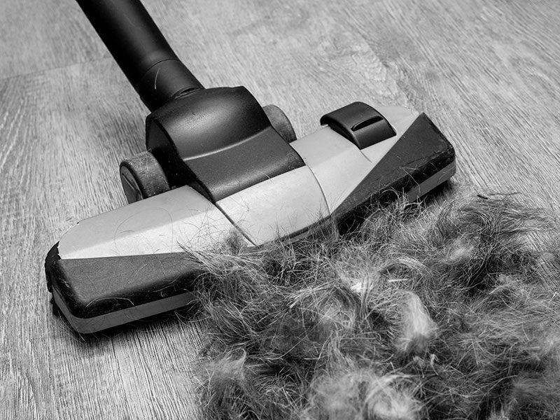 Shark Vacuum for Pet Hair