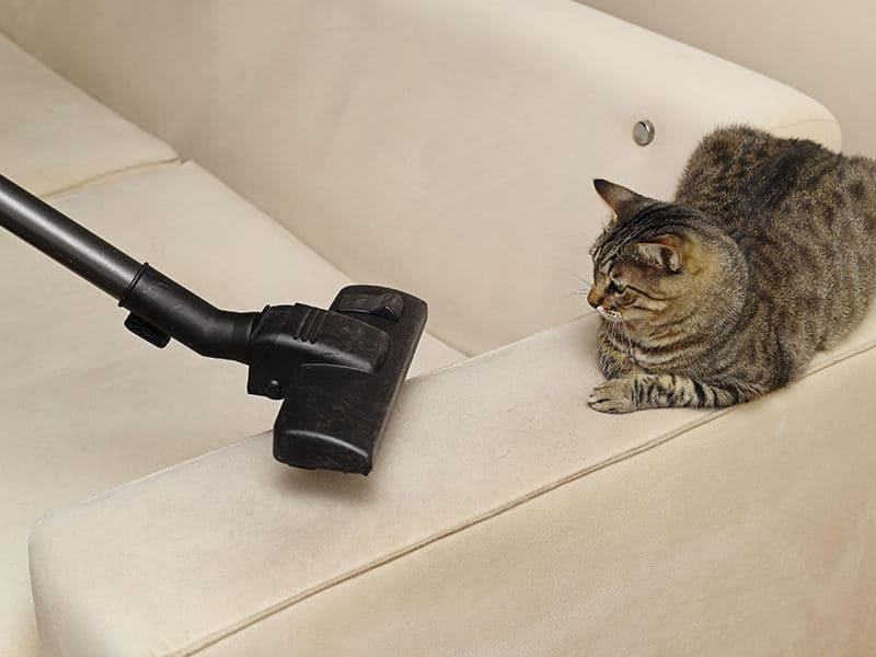 Vacuum Cleaner Pet Hair in Sofa