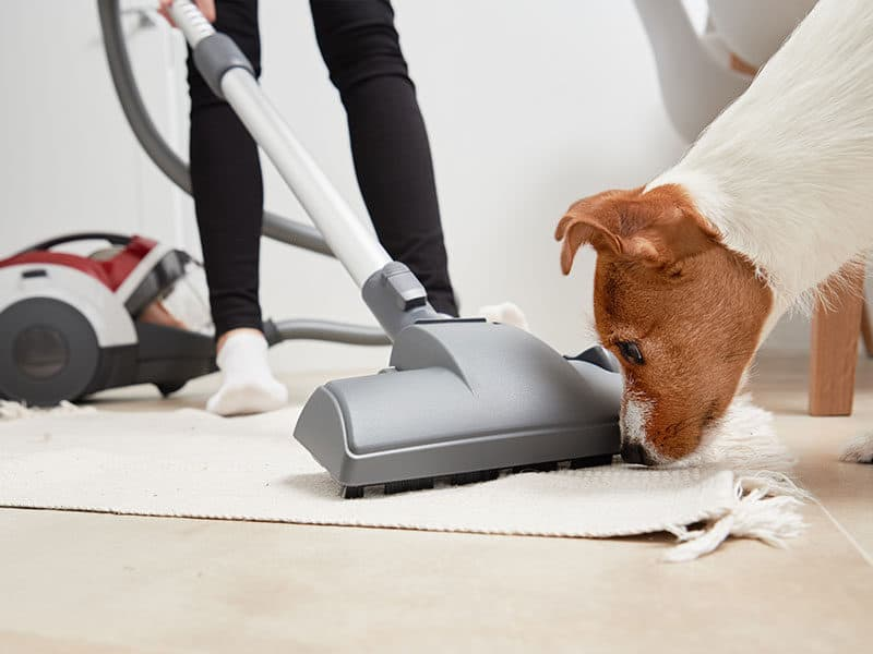 Carpet Cleaners For Pets