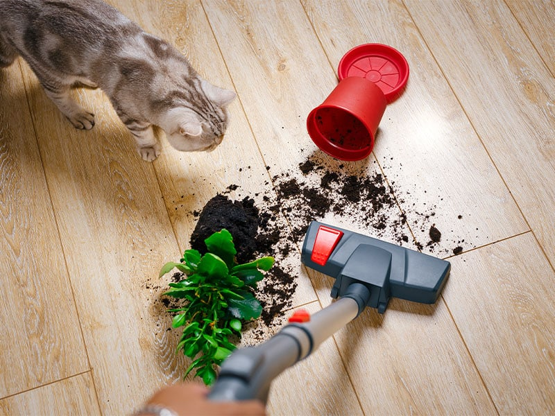 A vacuum cleaner can be used for almost every cleaning task at home.