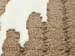 Clean Milk Out of Carpet