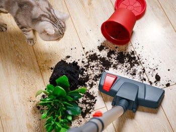 Dropped Pot Flower Home Man Vacuuming
