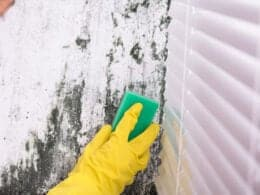 Get Rid of Mold In Basement
