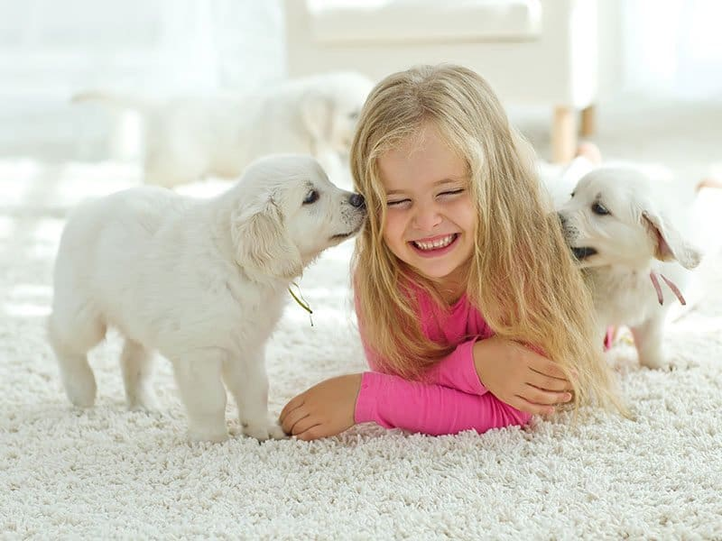 Little Girl With Pet on Carpet