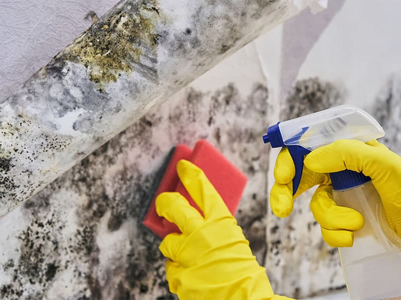 Mold Take Over the Walls
