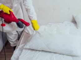 Remedies Rid Bed Bugs