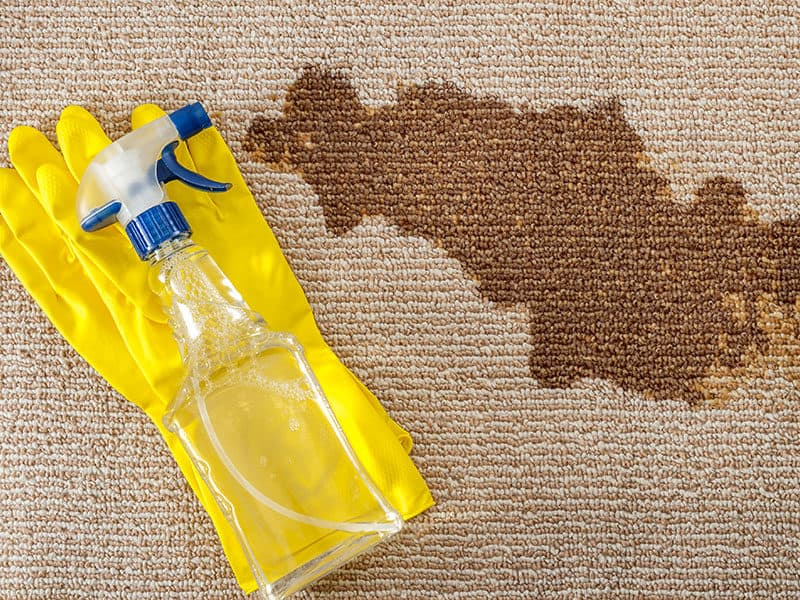 Remove Stains in Carpet