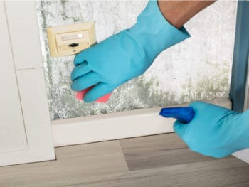 Rid Of Mold Smell