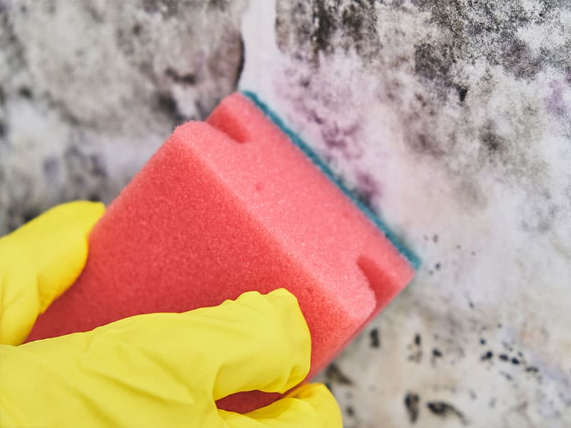 Try Detergents to Remove the Mold