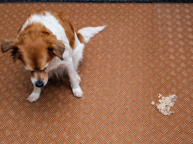 Vomit Carpet