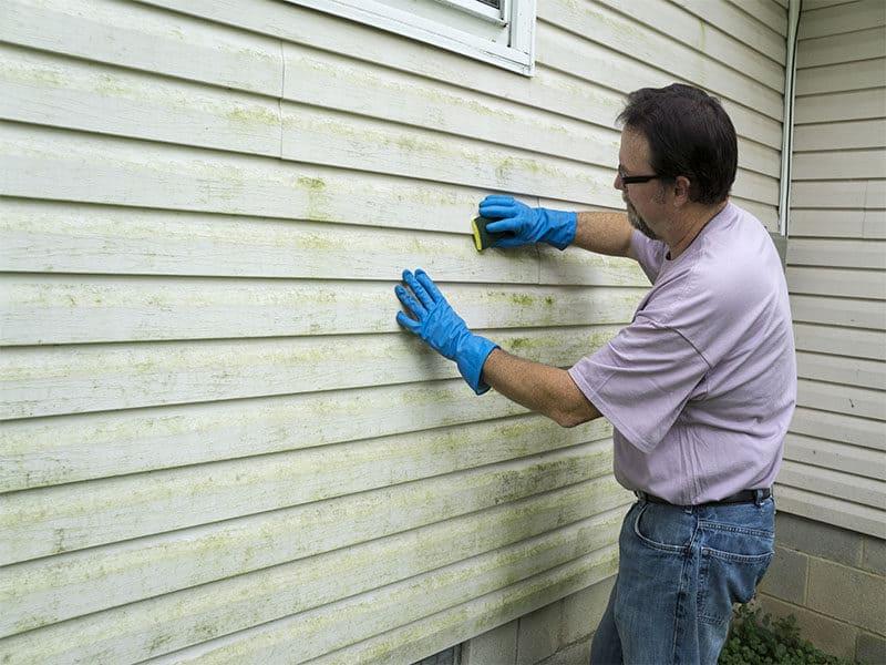 Cleaning Algae Mold
