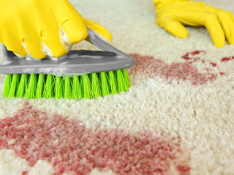 Cleaning Carpet by Brush
