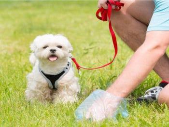 Dog Poop Out Carpet