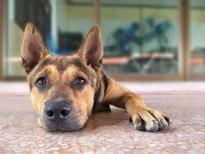 Dog on Terrazzo Floor