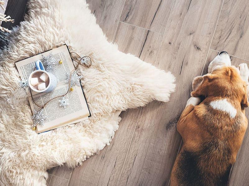 Laminate Floors with Dog