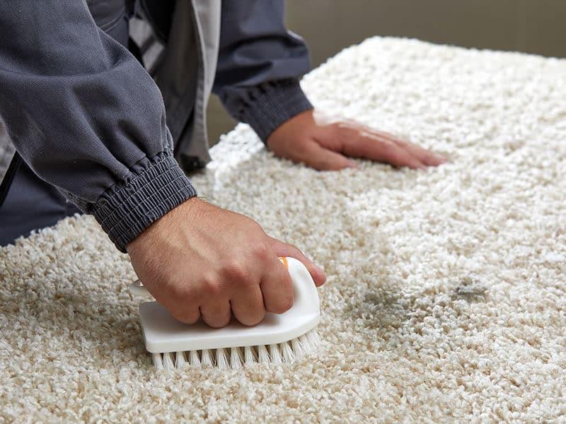Man Spraying Grey Carpet