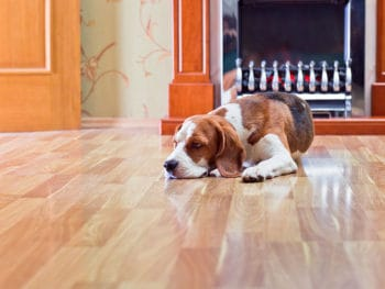 Superb Floorings for Pets