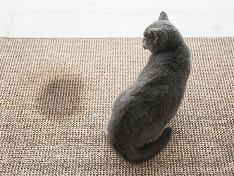 Cute Cat On Carpet Near