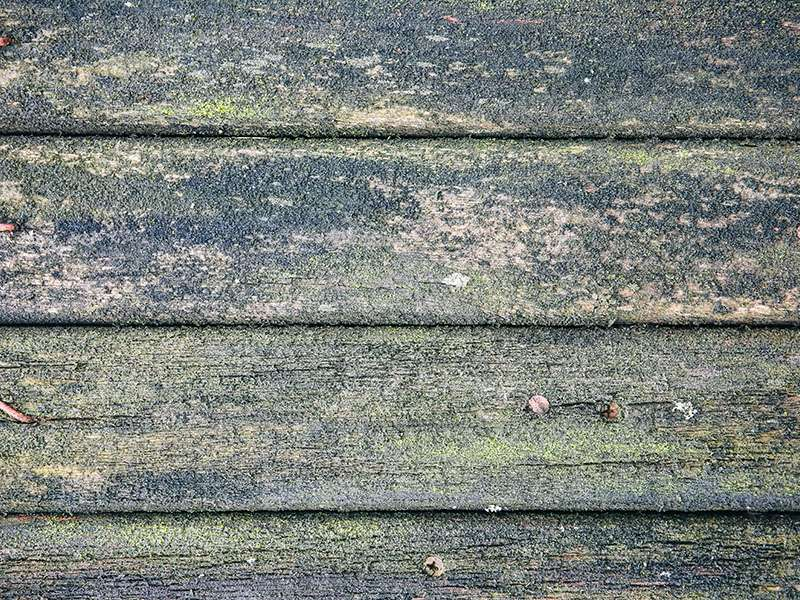 Planks Background Green Mold