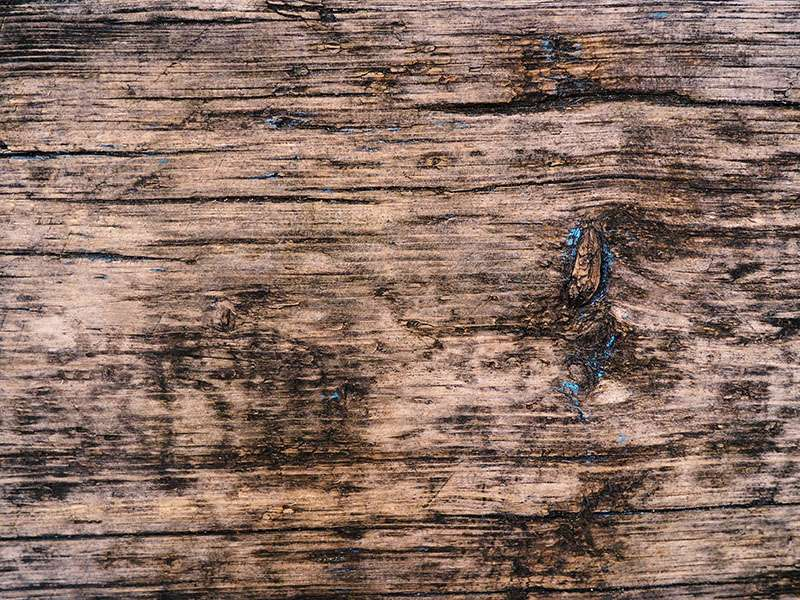 Scratches And Mold Texture