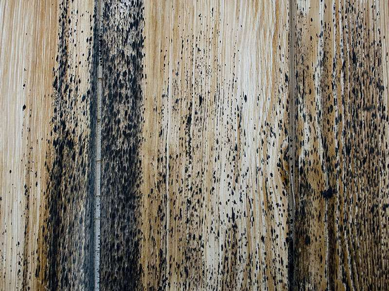 Wood Board Some Mold